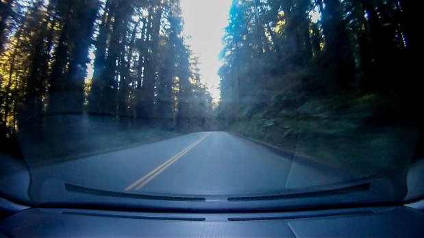 Traversing the great Redwood Forest